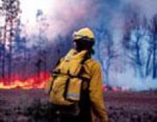 В Куженерском районе Марий Эл придорожный огонь перекинулся на лес