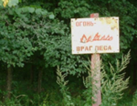 Запрет на посещение лесов Марий Эл не остановил шашлычников