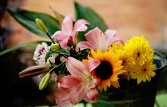 Йошкаролинцам предлагают окунуться в мир цветов
