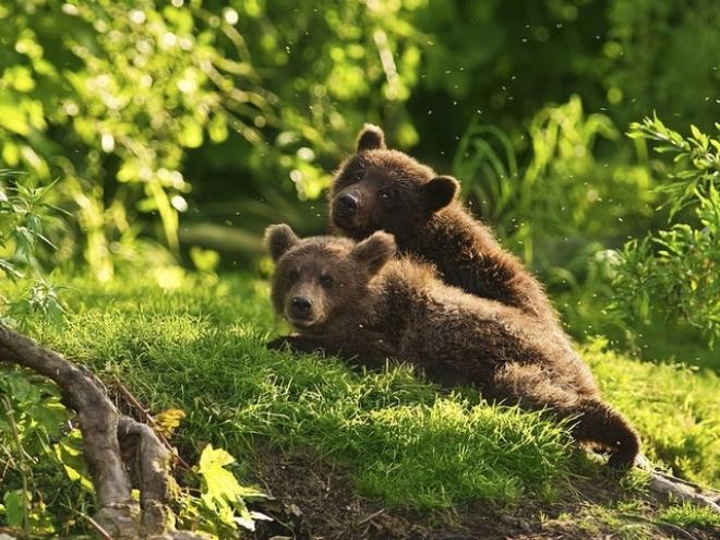В Марий Эл прекратил своё существование Департамент животного мира