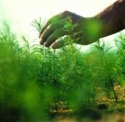 В Марий Эл в этом году планируют восстановить 1450 га леса