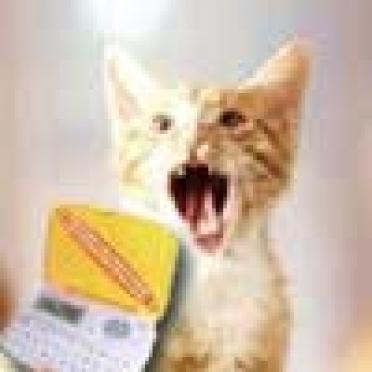 Йошкар-олинские любители домашних животных столкнулись с новым видом мошенничества