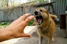 В Марий Эл зарегистрировано около 1200 нападений животных на людей