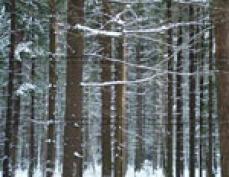 Лесному фонду Марий Эл не грозят проблемы кировских лесов