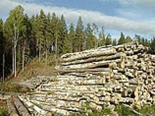 Незаконная вырубка леса в Марий Эл стоила федеральному бюджету 7 млн. 677 тыс. рублей, а лесному комплексу республики нанесен ущерб в размере почти 931 млн. рублей