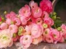 В цветочных салонах Йошкар-Олы предпраздничный ажиотаж