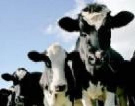 В Марий Эл с прилавков магазинов могли исчезнуть мясо и колбаса