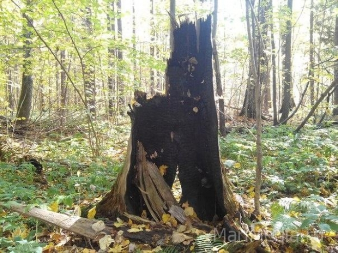 В выходные в Марий Эл зарегистрировано два лесных пожара