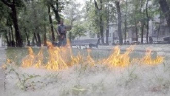 Волжск горит из-за тополиного пуха