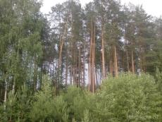В лесах Марий Эл установлен I класс пожарной опасности