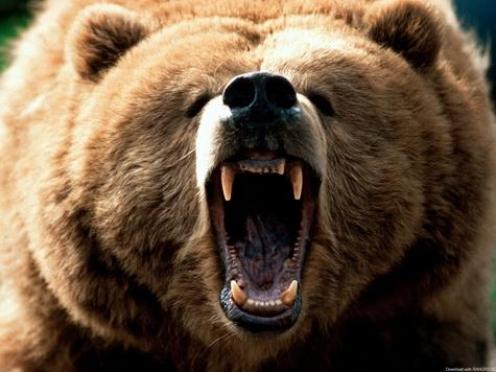 Житель Марий Эл незаконно изготовил оружие, чтобы отпугивать медведя