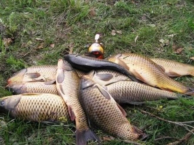 Задержан гаишник-браконьер, незаконно наловивший более 40 килограммов рыбы