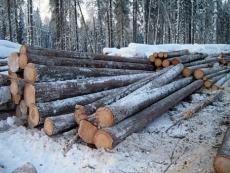 Министерству лесного хозяйства по Марий Эл предложили дружить с коллегами из соседних регионов