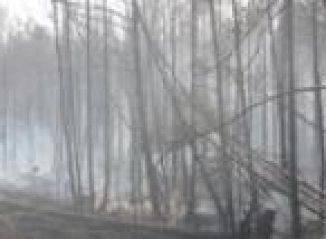 Лесные пожары в Звениговском и Килемарском районах остаются на контроле специалистов (Марий Эл)