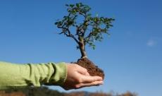 В Парке Победы высадят более 200 деревьев