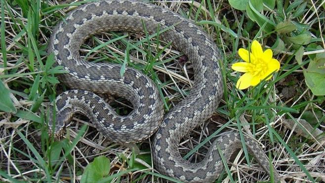 Активность змей в пригородах столицы Марий Эл вызывает беспокойство у медицинских работников города