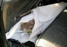 В Марий Эл изъяли почти полтора килограмма наркотиков
