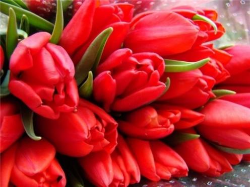 В Йошкар-Оле взвинтили цены на живые цветы