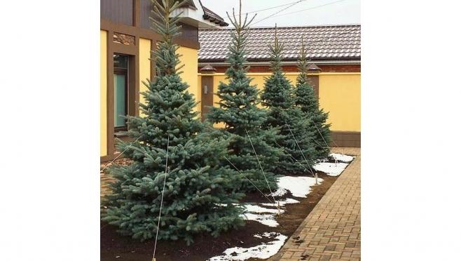 Ноябрь - время подумать о посадке высоких деревьев на вашем участке