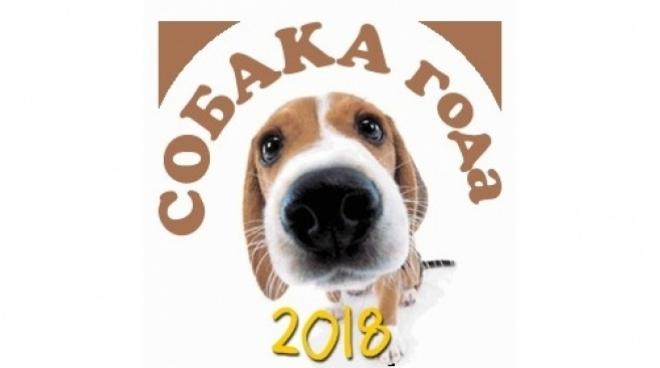 На сайте MariMedia.ru выбирают «Собаку года-2018»