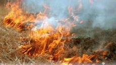 Дмитрий Медведев запретил выжигать сухую траву  и разводить костры