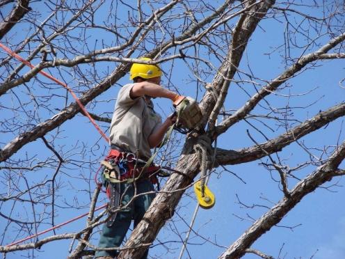 В Йошкар-Оле на улице Вознесенской вырубают деревья