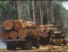 В Горномарийском районе задержали группу «чёрных лесорубов», которые вырубили лес на полмиллиона рублей