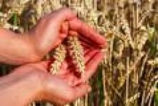 Аграрии Поволжья соберутся в Марий Эл