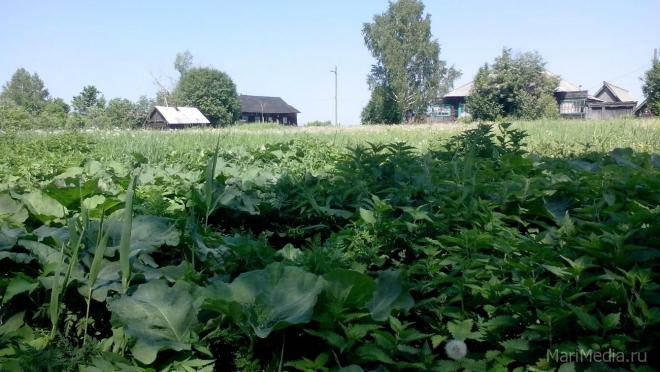 Депутаты предлагают смягчить наказание для граждан за самовольное занятий земельных участков
