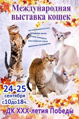 Международная выставка кошек постер