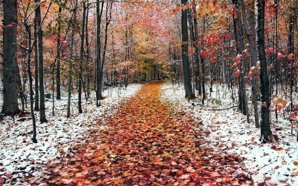 В выходные обещают мокрый снег, заморозки до -2 °С