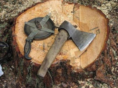 «Черные лесорубы» свирепствуют в Оршанском районе Марий Эл