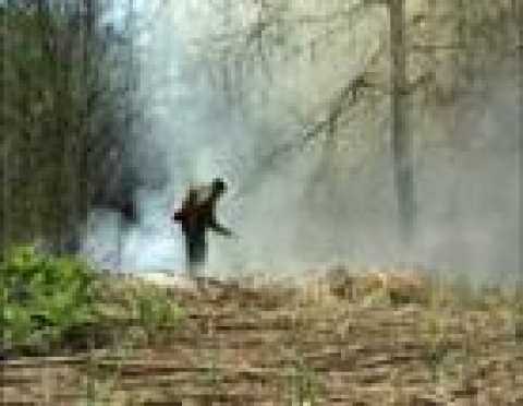 Итоговая площадь сгоревшего леса вдоль Кокшайского тракта – 4028 га