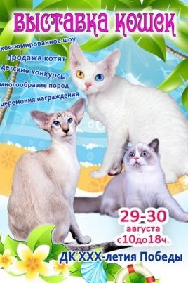 Выставка кошек постер