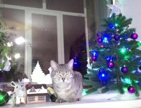 На сайте Marimedia выбрали самого новогоднего кота