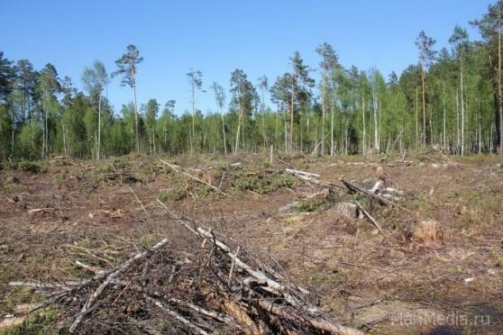 Житель Нижегородской области занимался незаконной рубкой деревьев в Марий Эл