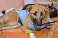 Тяжелобольным животным помогут переносить боль