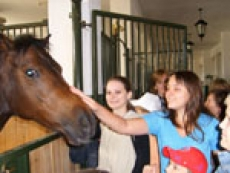 МВД Марий Эл проводит экскурсии на конюшни