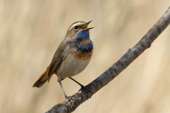 Фотовыставка «Природа смотрит на тебя» откроется в Йошкар-Оле