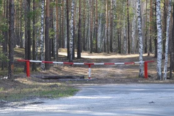 Леса в Марий Эл будут закрыты до конца лета