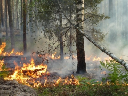 В Национальном парке «Марий Чодра» горел лес