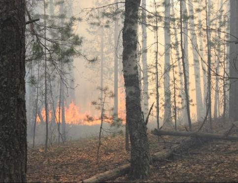 В Марий Эл подписан приказ о начале пожароопасного сезона