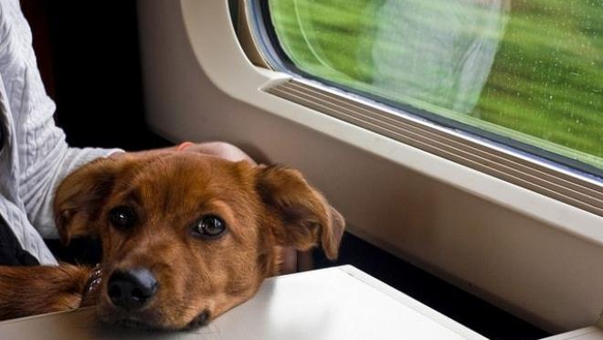 У домашних животных появилась электронная версия железнодорожных билетов