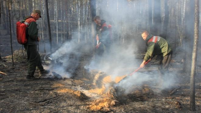 В лесах Марий Эл объявлен IV класс пожарной опасности