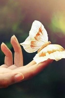 Крылья бабочки постер
