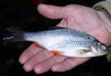 Где в Марий Эл  можно ловить рыбу бесплатно