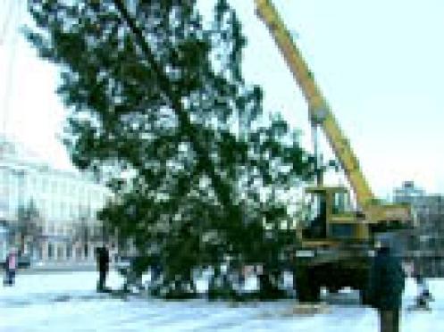 На главной площади столицы Марий Эл установили новогоднюю ель