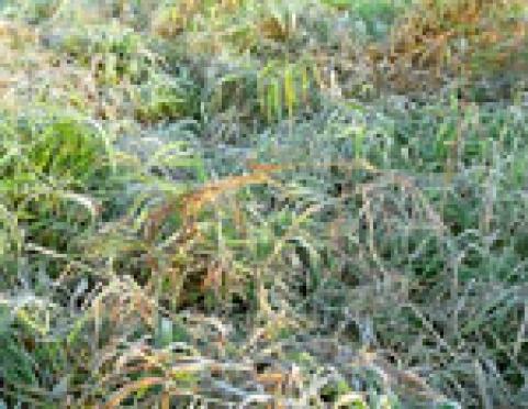 Этой ночью в столице Марий Эл синоптики ожидают заморозки