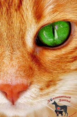Выставка-раздача кошек