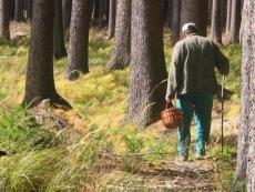 Леса Марий Эл снова закрыты для свободного посещения